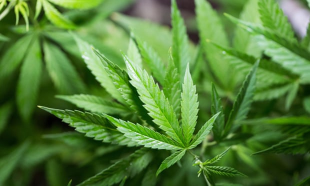 Watchdog declines to back NHS cannabis treatment for epilepsy